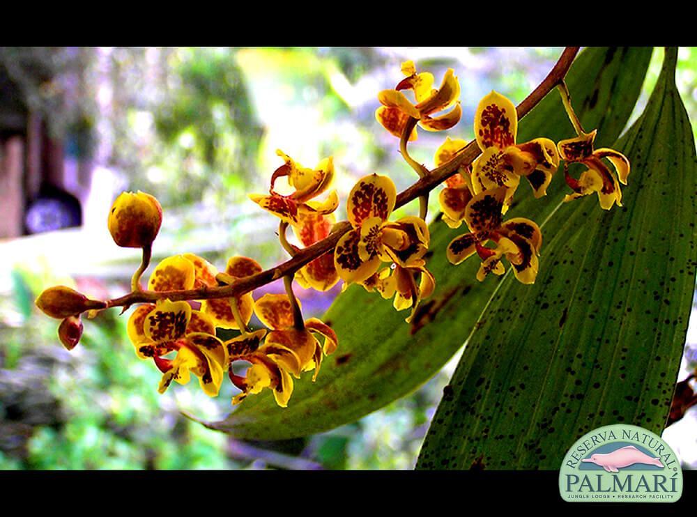 Reserva-Natural-Palmari-Flora-12