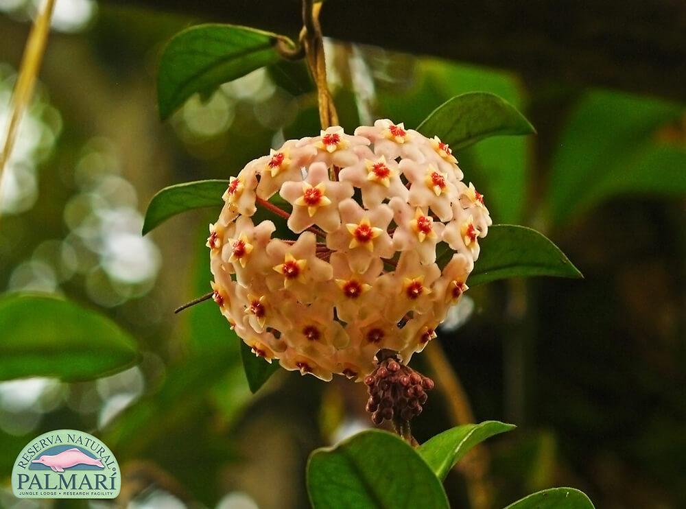 Reserva-Natural-Palmari-Flora-14