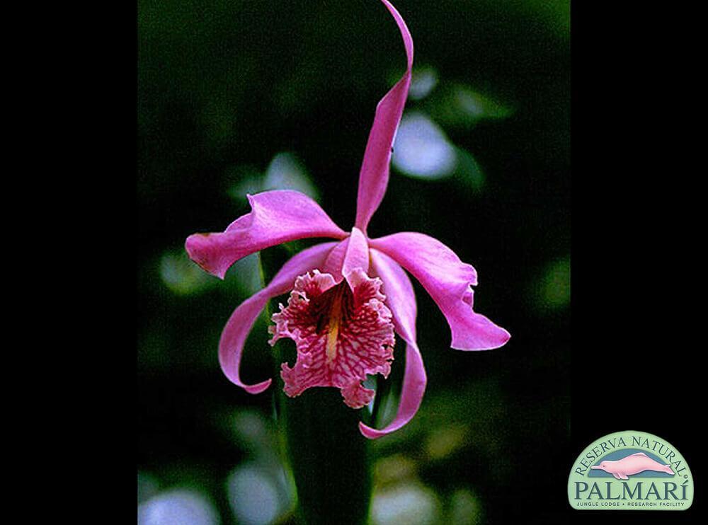 Reserva-Natural-Palmari-Flora-15