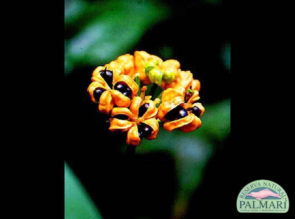 Reserva-Natural-Palmari-Flora-17