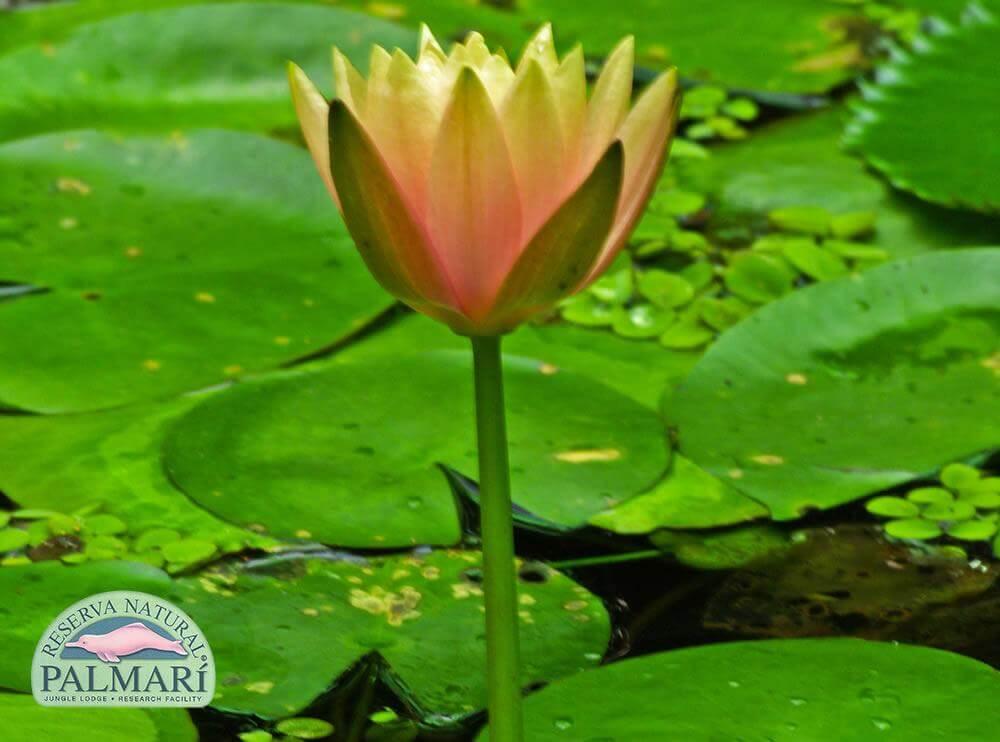 Reserva-Natural-Palmari-Flora-18