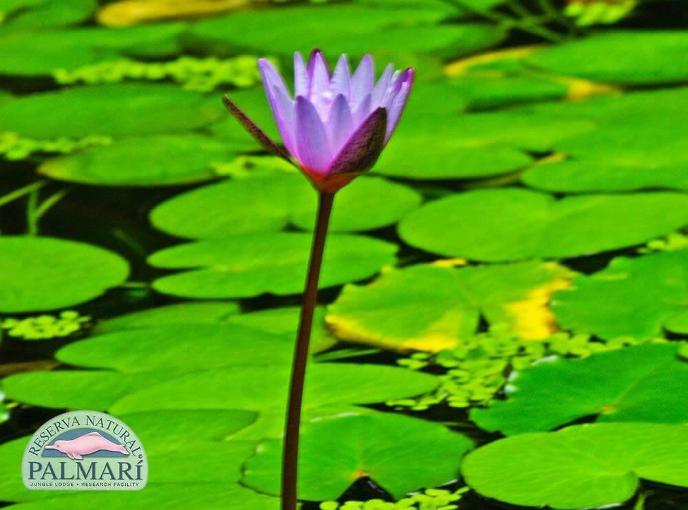 Reserva-Natural-Palmari-Flora-20