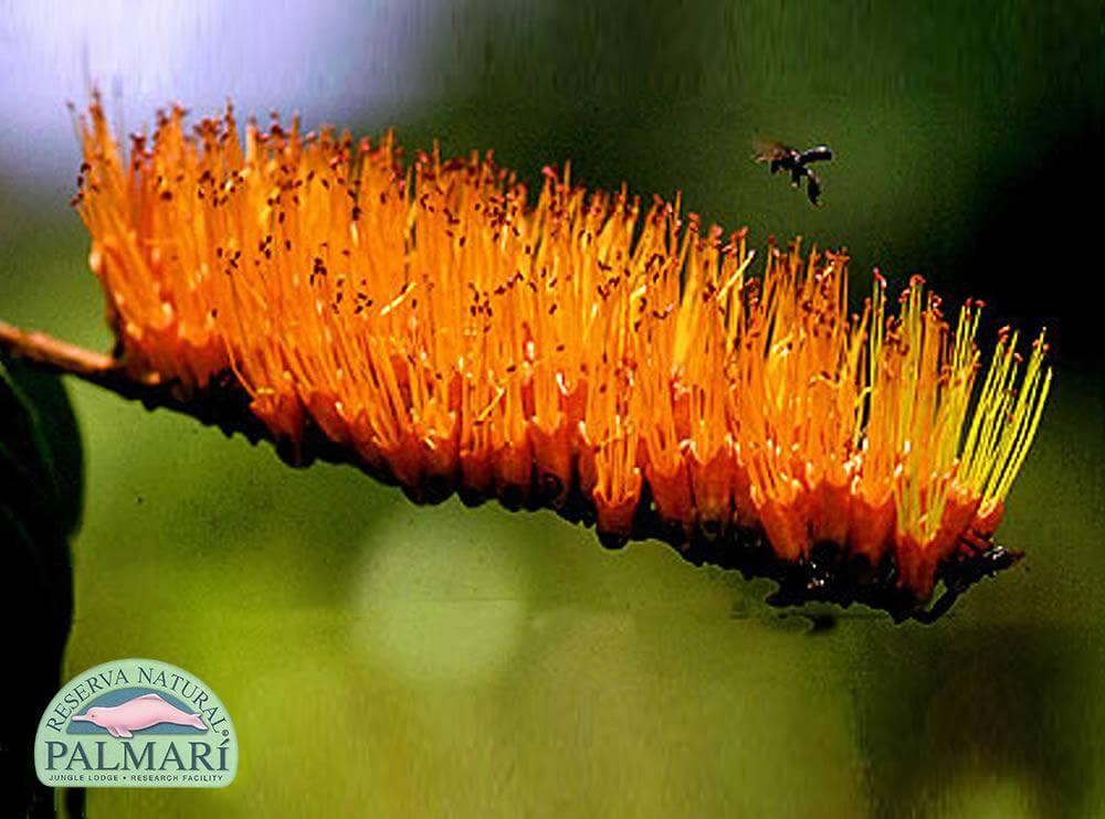Reserva-Natural-Palmari-Flora-24
