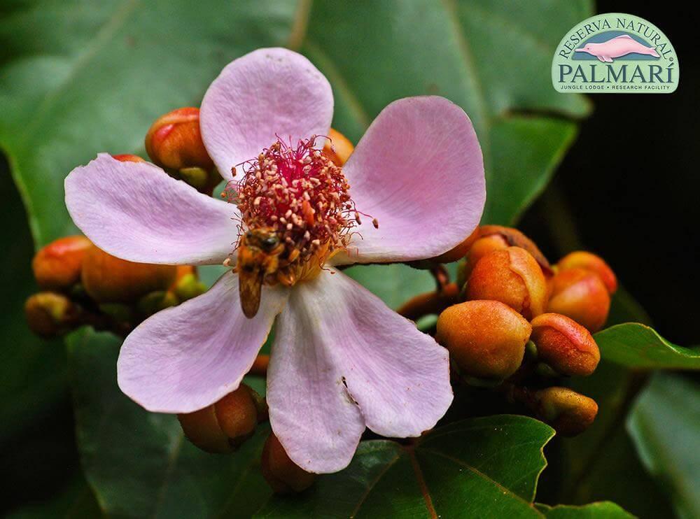 Reserva-Natural-Palmari-Flora-25