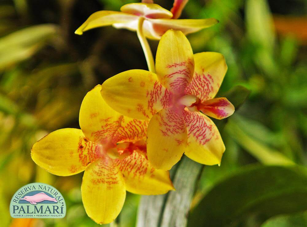 Reserva-Natural-Palmari-Flora-27