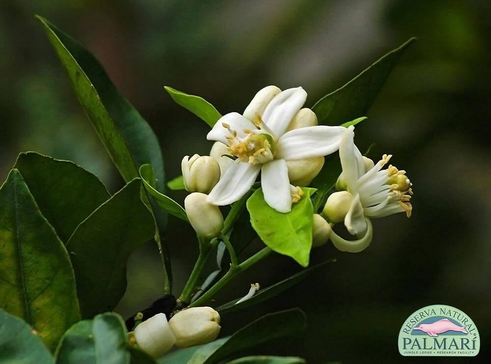 Reserva-Natural-Palmari-Flora-30