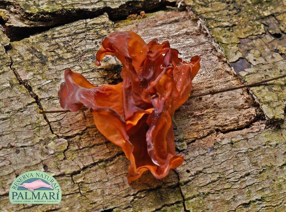 Reserva-Natural-Palmari-Flora-31