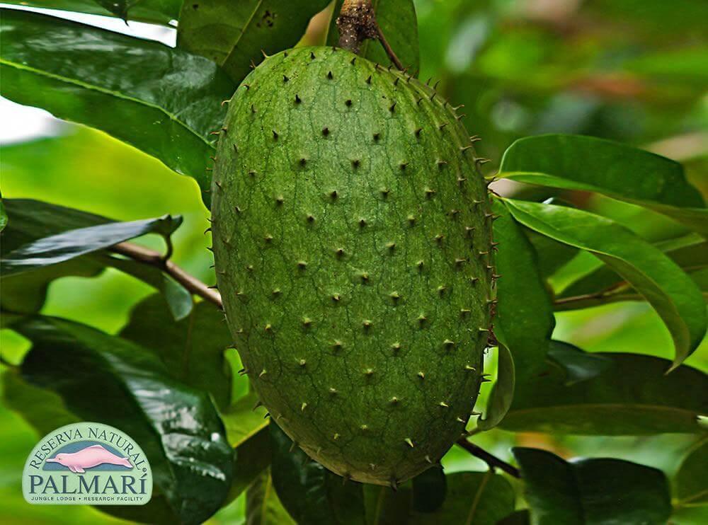 Reserva-Natural-Palmari-Flora-32