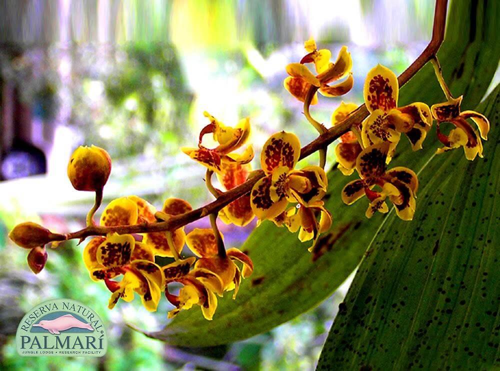 Reserva-Natural-Palmari-Flora-33