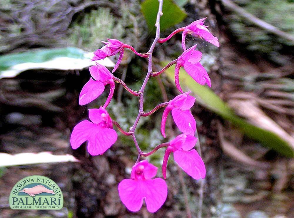 Reserva-Natural-Palmari-Flora-41