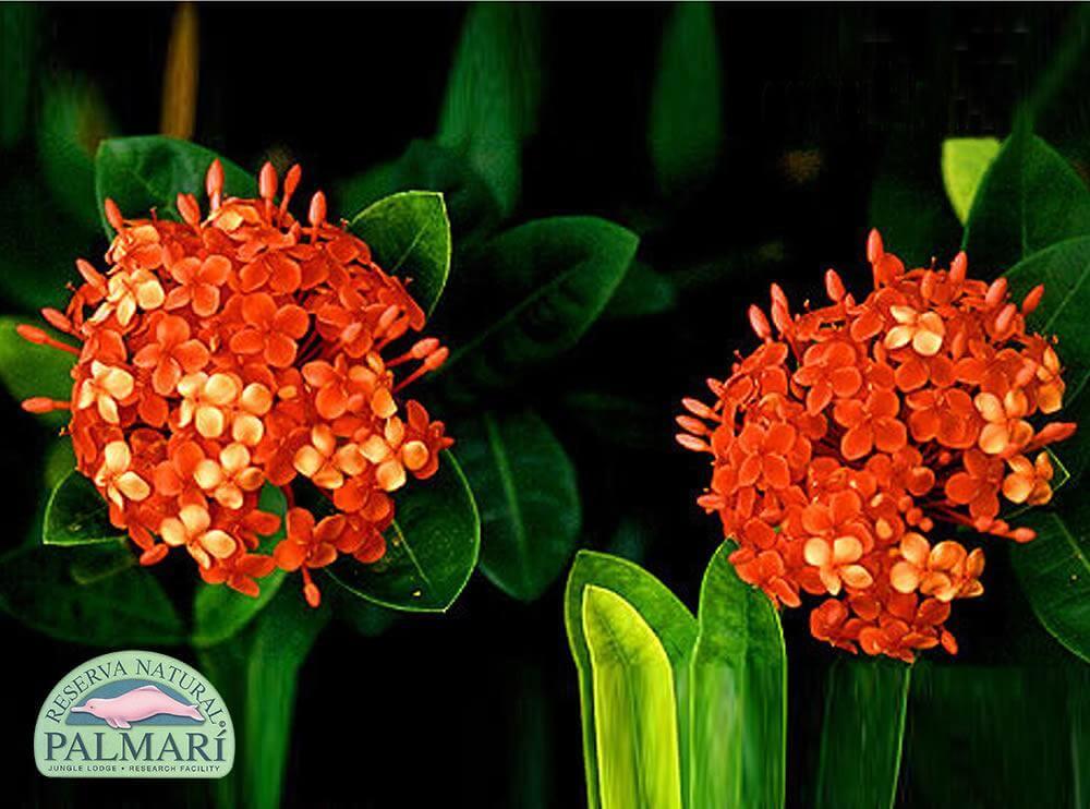 Reserva-Natural-Palmari-Flora-42