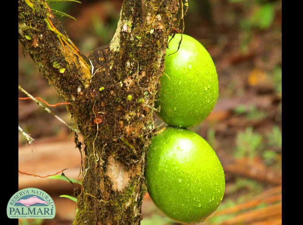 Reserva-Natural-Palmari-Flora-44