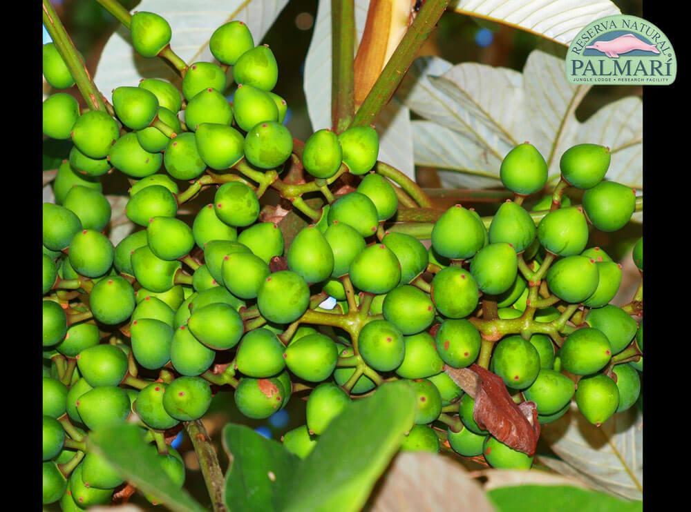 Reserva-Natural-Palmari-Flora-47