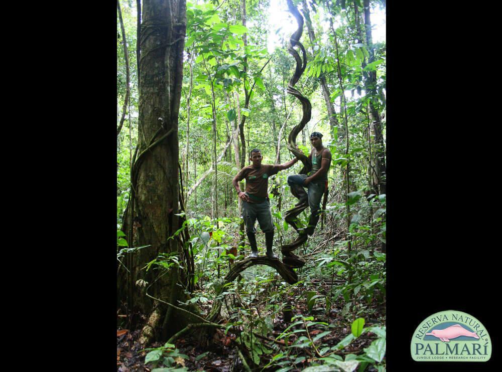 Reserva-Natural-Palmari-volunteers-08